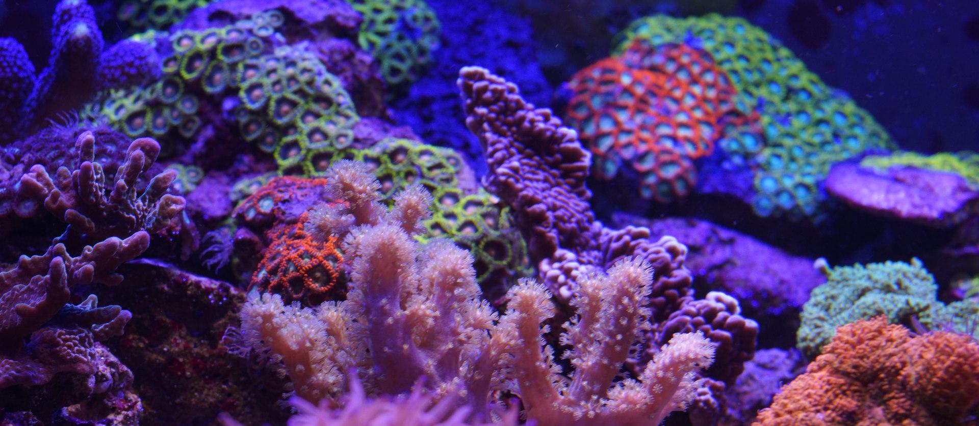 Meerwasseraquarium LED Beleuchtung
